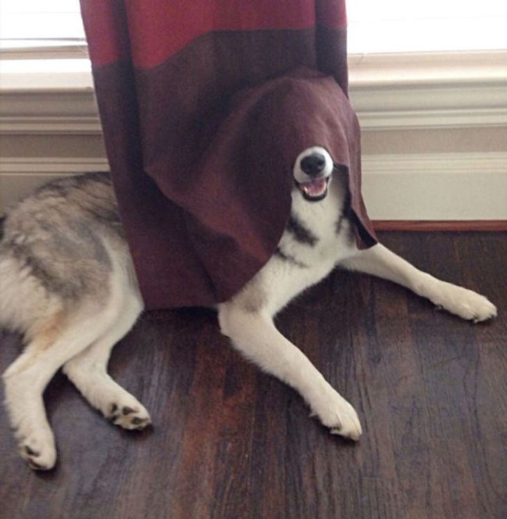 20dogs who think they've found the perfect hiding place