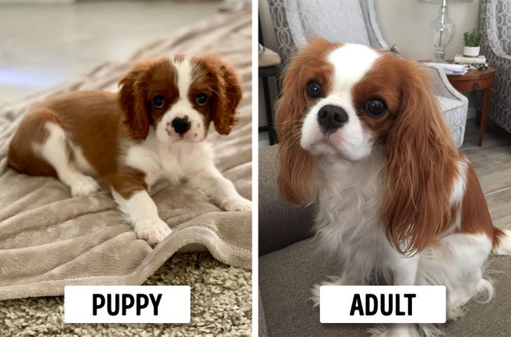 15 Dog Breeds That Look Like Puppies Forever