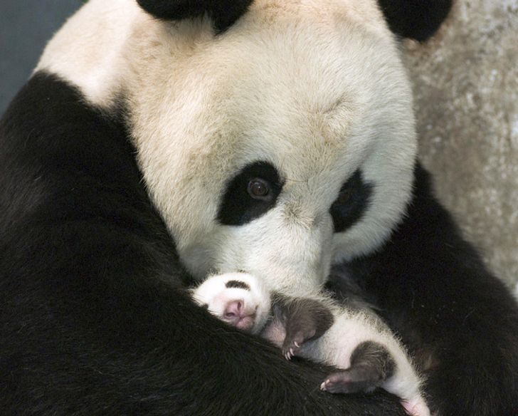 15Baby Animals That Will Melt Even the Coldest Heart