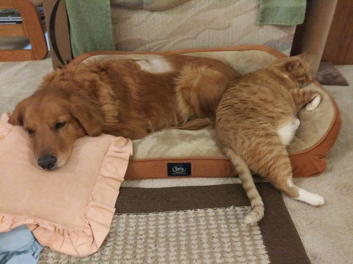 20+ Photos Proving Cats Are Good Boys Too
