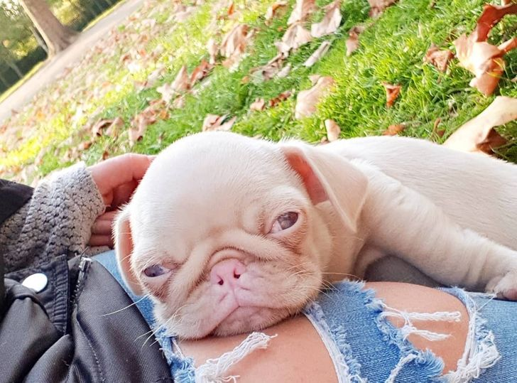 Meet Milkshake, a Dog Who's So Rare You'll Hardly Find a Few Like Him in the Whole World (20 Pics)
