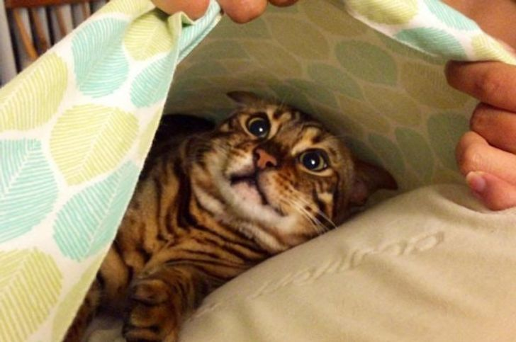 20+Animals Who Can't Figure Out What and Why Humans Are