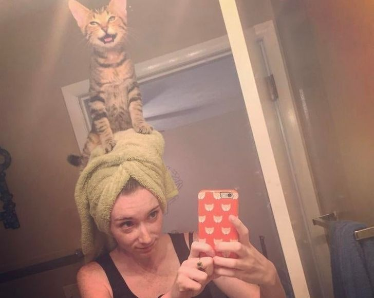20+ Shameless Cats Who Know Who's the Boss in the House (and It's Not the Human)
