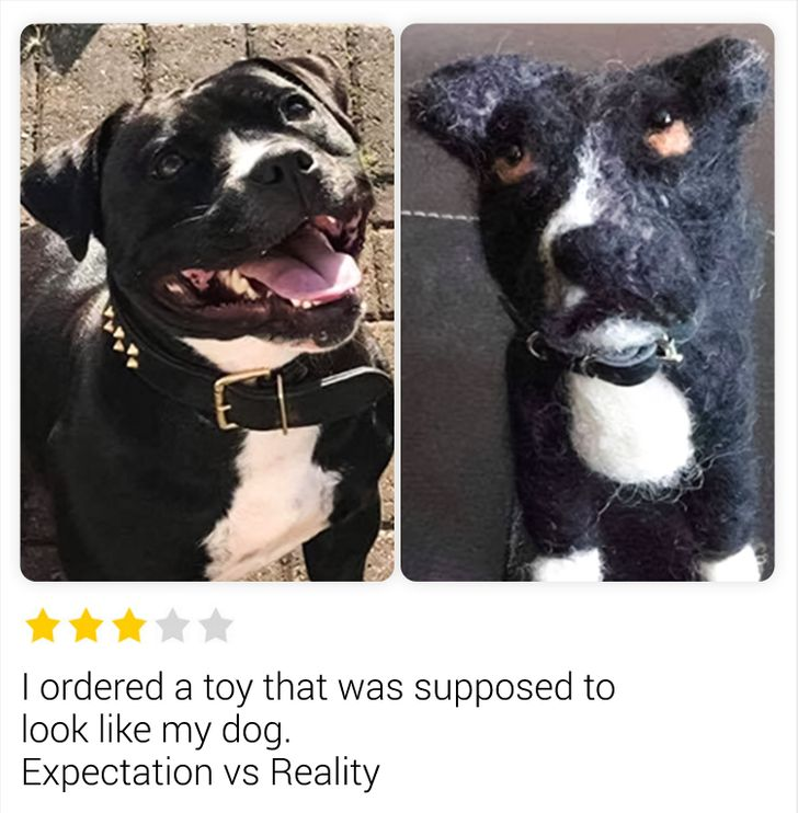 9 People Who Just Wanted to Leave a Review, but Made Jokes for the Whole Internet Instead