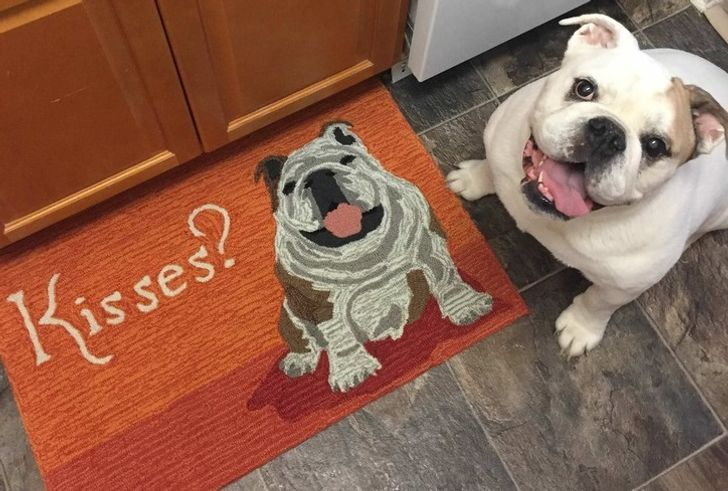 30+ Pics That Prove Your Life Will Never Be Boring If You Own a Bulldog