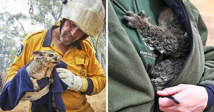 15+ Photos From Australia That Fill Our Hearts With Hope