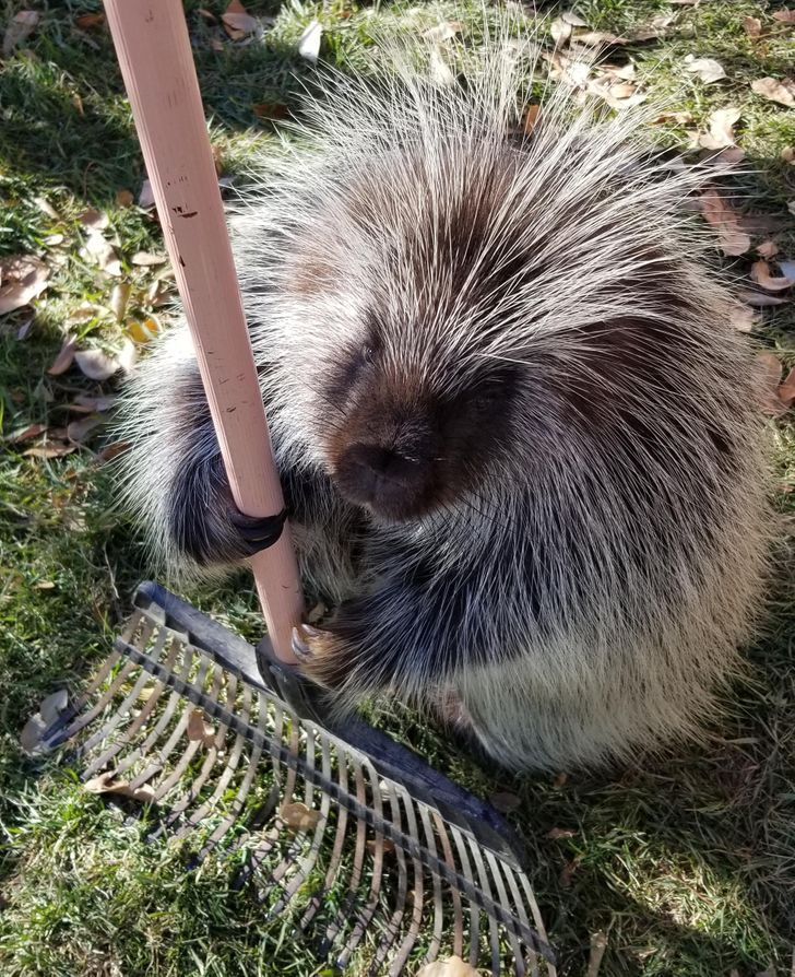 20 con vật cưng có bộ lông mềm mịn tới mức bạn chỉ muốn lấy làm gối ôm và ngủ cho qua mùa dịch 4