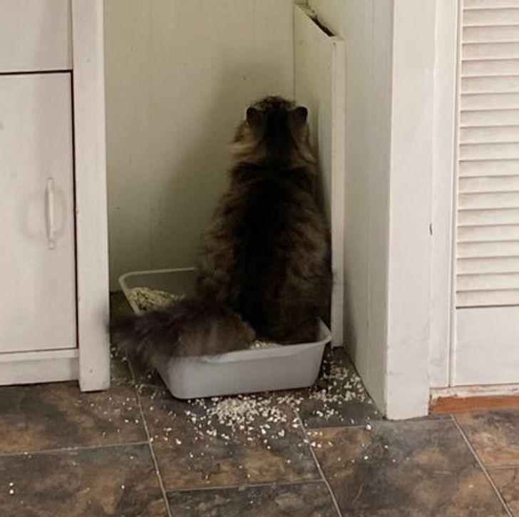 23 bằng chứng cho thấy mèo là cái loài thích ăn Pate của sen nhưng mà lại mê máy lạnh nhà hàng xóm 3