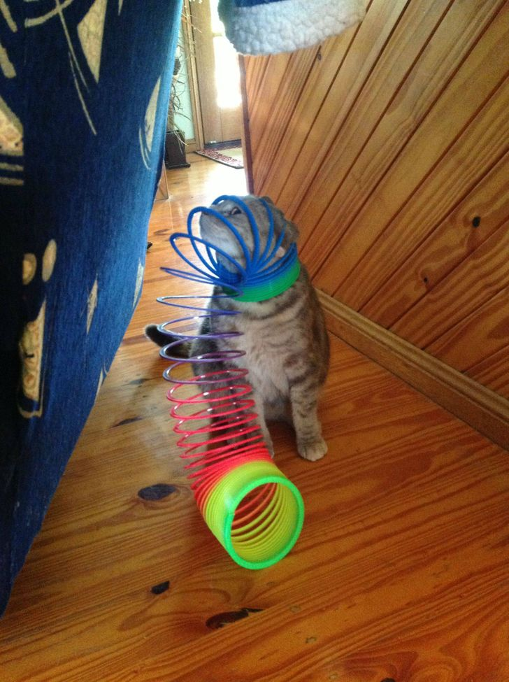 18Adorably Stuck Animals You Might Feel Bad for Laughing At