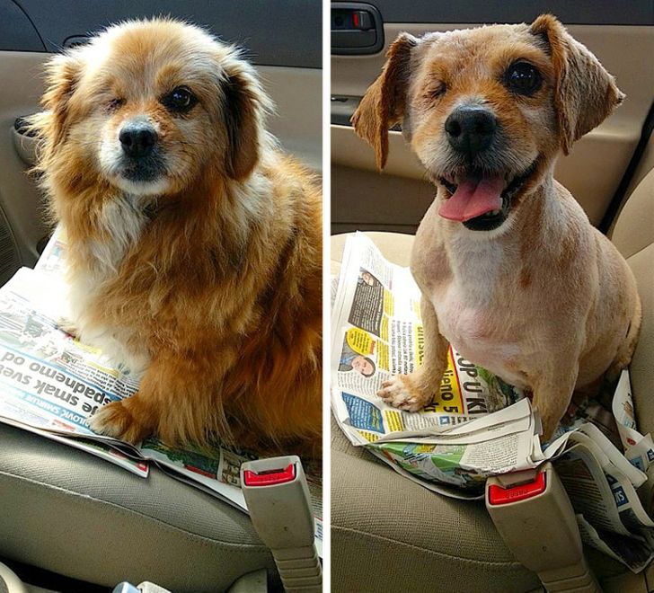 17 People Who Took Their Dog to the Groomer and Got Back a Completely Different Pet