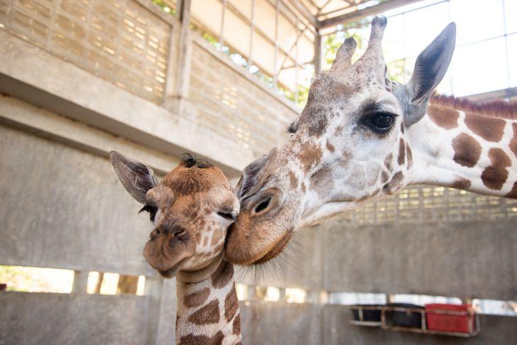 Doğanın Ne Kadar Bilge Olduğunu Gösteren Göz Kamaştırıcı 10 Hayvan Gebelik