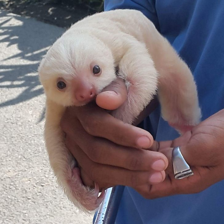 18 Precious Animal Babies You've Probably Never Seen