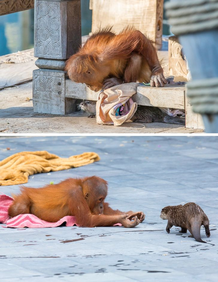 17 Animal Photos That Have Amazing Stories Behind Them