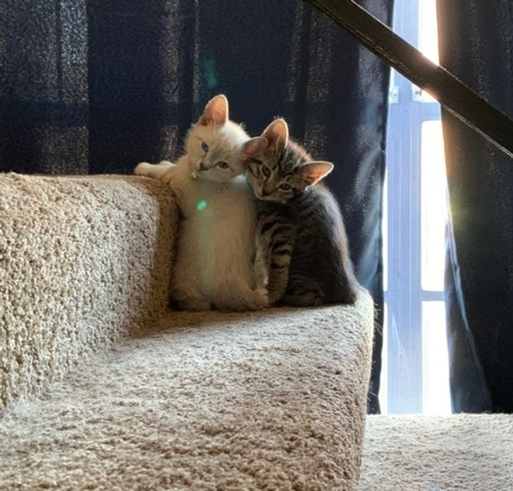 16 Reddit Users Who Welcomed Homeless Pets to Their Families and Made Them Happy