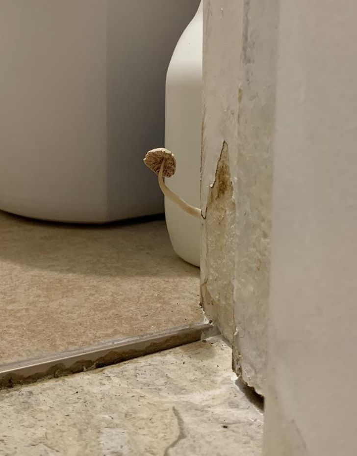 15 Details You Never Imagined Finding in Bathrooms
