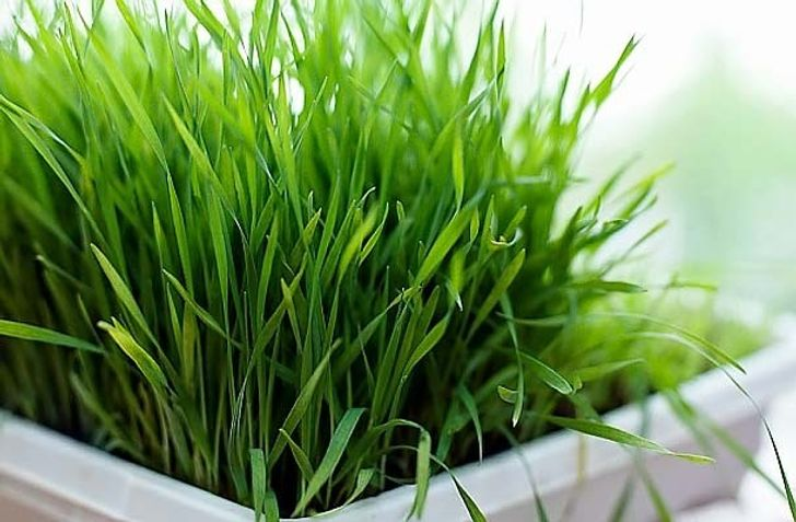 Nine great edible plants you can grow inyour kitchen
