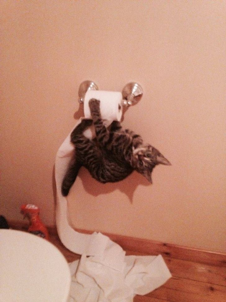 20+ Cats Who Are Good at Being Monsters