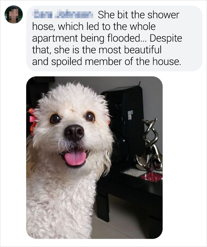 20+ Bright Side Readers Shared the Crazy Things Their Pets Did While They Were Away