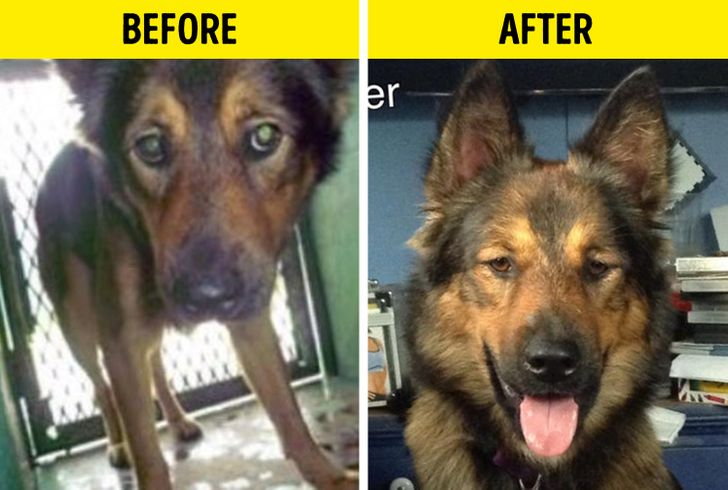 20 Before and After Photos of Adopted Animals That Prove Love Can Move Mountains