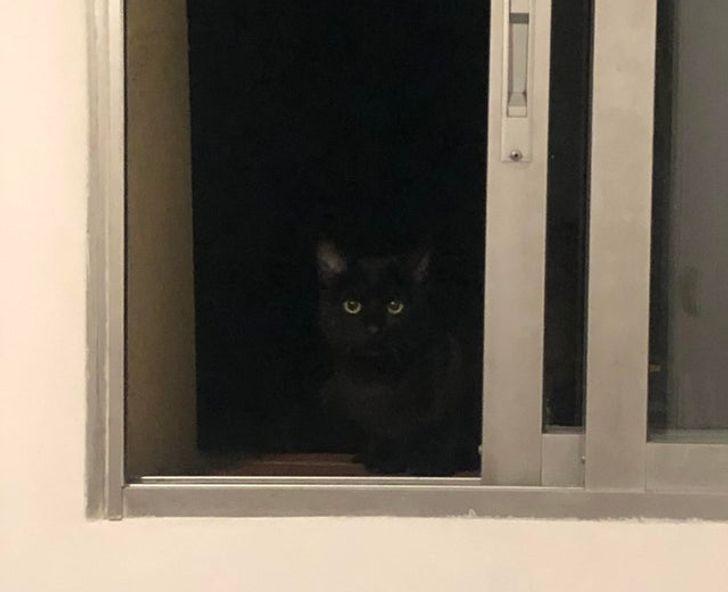 23 bằng chứng cho thấy mèo là cái loài thích ăn Pate của sen nhưng mà lại mê máy lạnh nhà hàng xóm 20