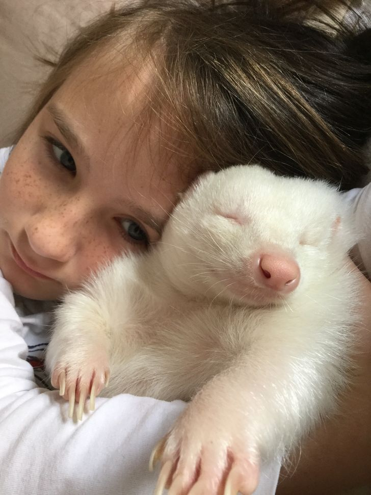 24 Albino Animals Who Are As Real As Your Life