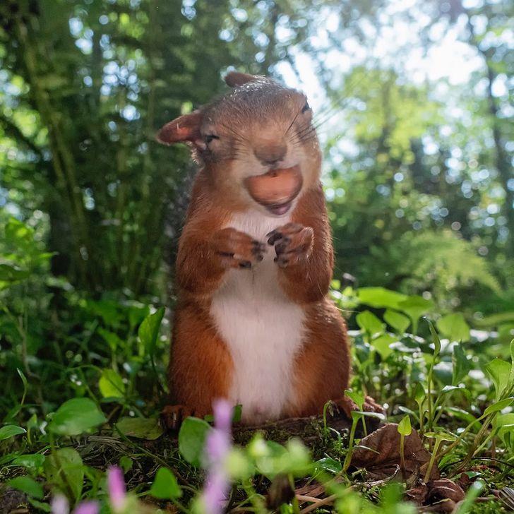 یک عکاس جذابیت سنجاب ها را ثبت می کند و ما فکر می کنیم روح خود را حیوان یافته ایم