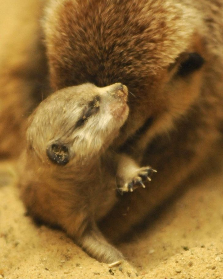 19 Newborn Animals That Know How to Be Sweet From the Start