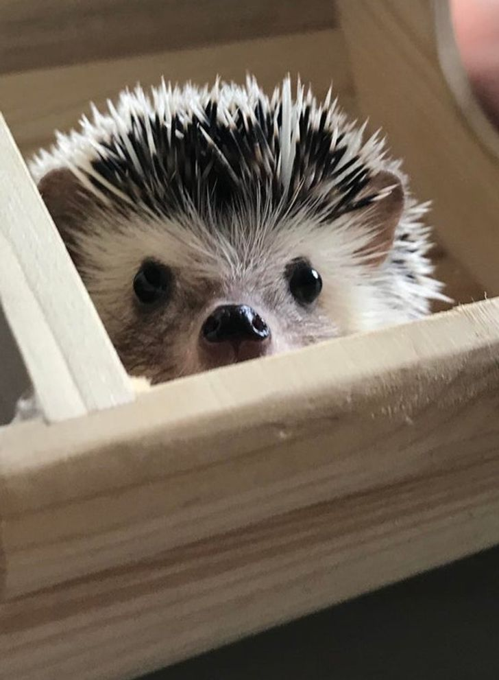 15+ Pets That Will Brighten Your Day, Right Here and Right Now