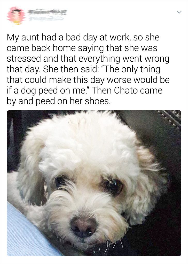 20+ Pet Stories Their Owners Just Had to Share With Us