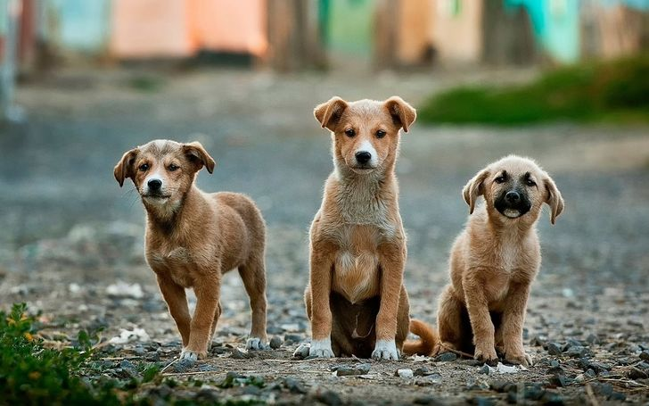 Holland Becomes the First Country Without Street Dogs, and Here's How They Achieved It