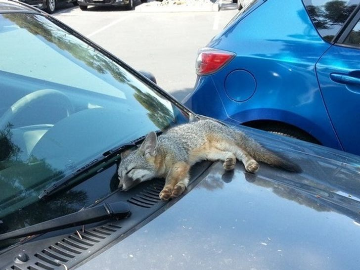20Hilarious Photos Showing That Animals Can Fall Asleep Literally Anywhere