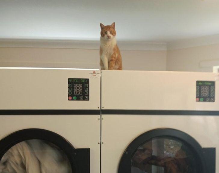 23 bằng chứng cho thấy mèo là cái loài thích ăn Pate của sen nhưng mà lại mê máy lạnh nhà hàng xóm 4