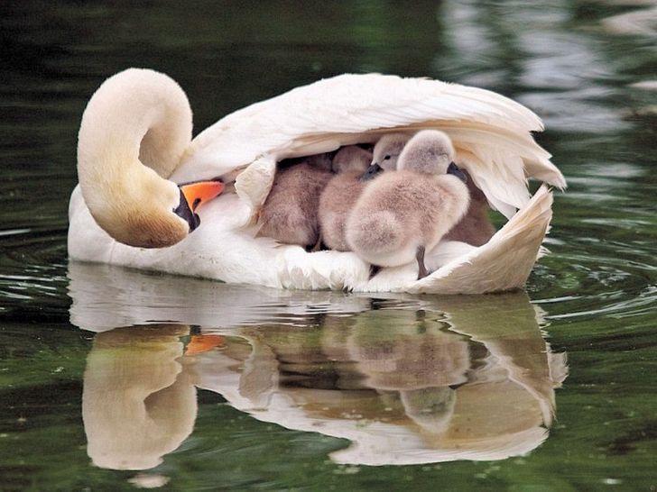 16Photographs That Prove Mom Will Always BeMom