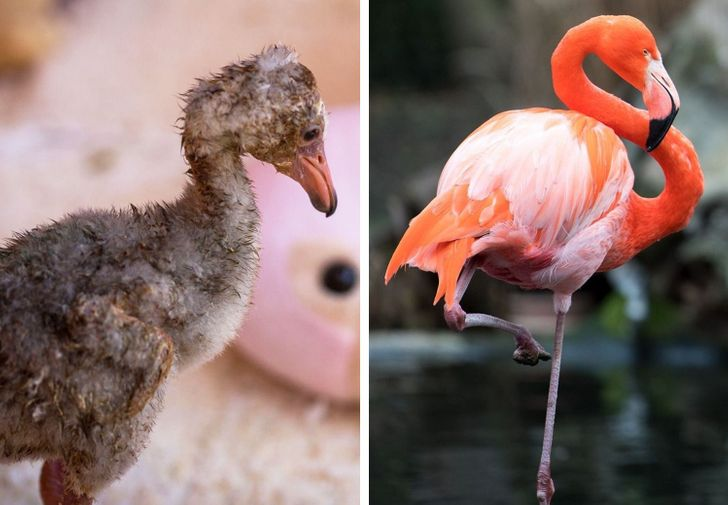 18 Baby Animals That Will Give You Instant Heart Eyes