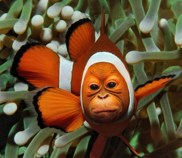 Reddit Users Are Mixing Animals in Photoshop, and We Can't Wait to See How Far They've Gone