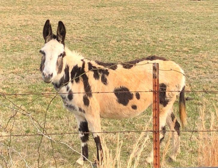 20 de animale cu o caracteristică unică care sunt uimitoare în imperfecțiunea lor