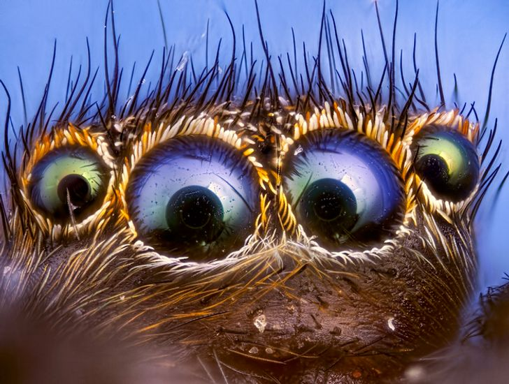 Turns Out, You Might Conquer Your Fear of Spiders in 7 Seconds