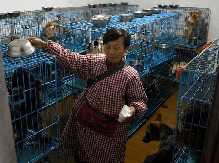 Ako vyzerá život ženy, ktorá žije s 1 300 psami, 100 mačkami a 4 koňmi