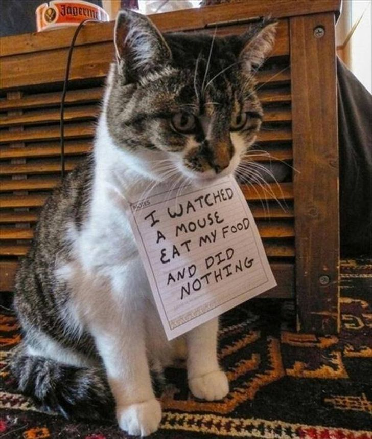 20+ Cats That Are Such Bad Roommates They Are Actually the Best