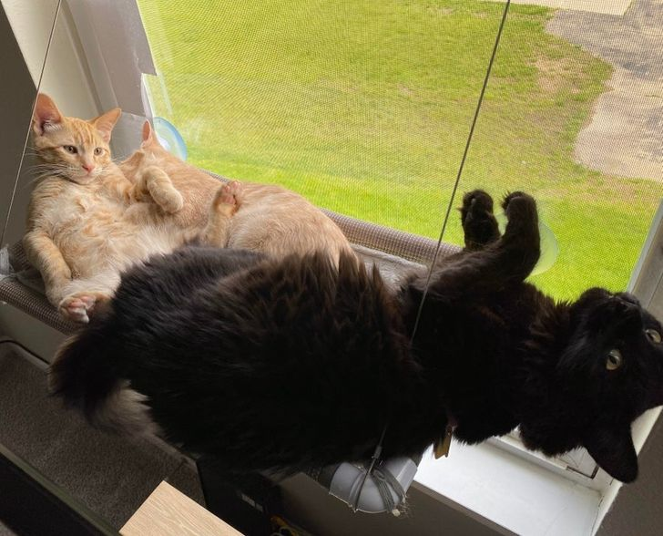 """20 Pets Whose """"Systems"""" Crashed Temporarily"""