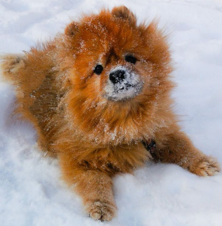 20+ Dog Breeds That Are Basically Teddy Bears Who Love You Back