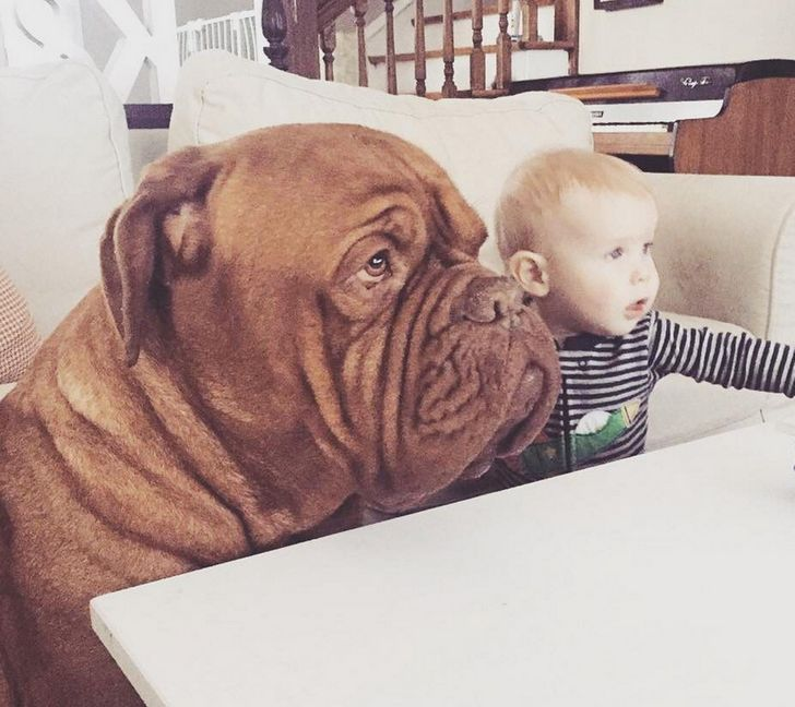 20 Pictures That Prove Animals Are the Best Guardians for Your Kids