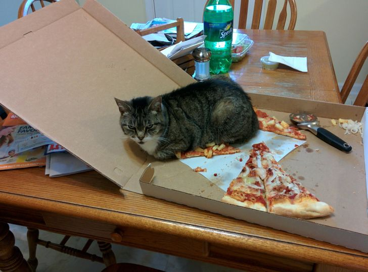 """20+ Animals Who Don't Understand the Concept of """"No"""""""
