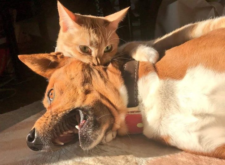 25 Animals Whose Vivid Emotions Would Even Make Gloomy Gus Smile