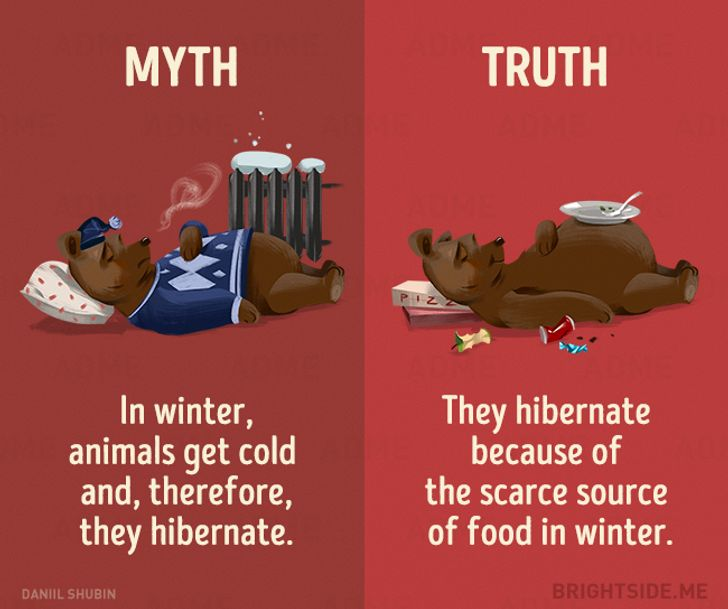 12Myths About Animals That WeStill Believe