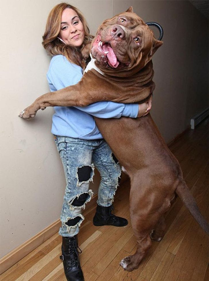 28 Dogs That Have No Idea How Big They Are