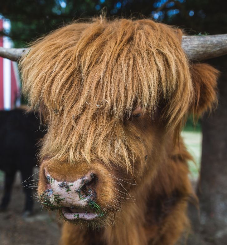 25Animals Who Rock Their Glorious Hairstyles