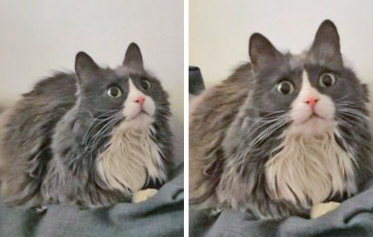"""20 Cats Reacting to Events That Are Entirely """"New"""" to Them"""