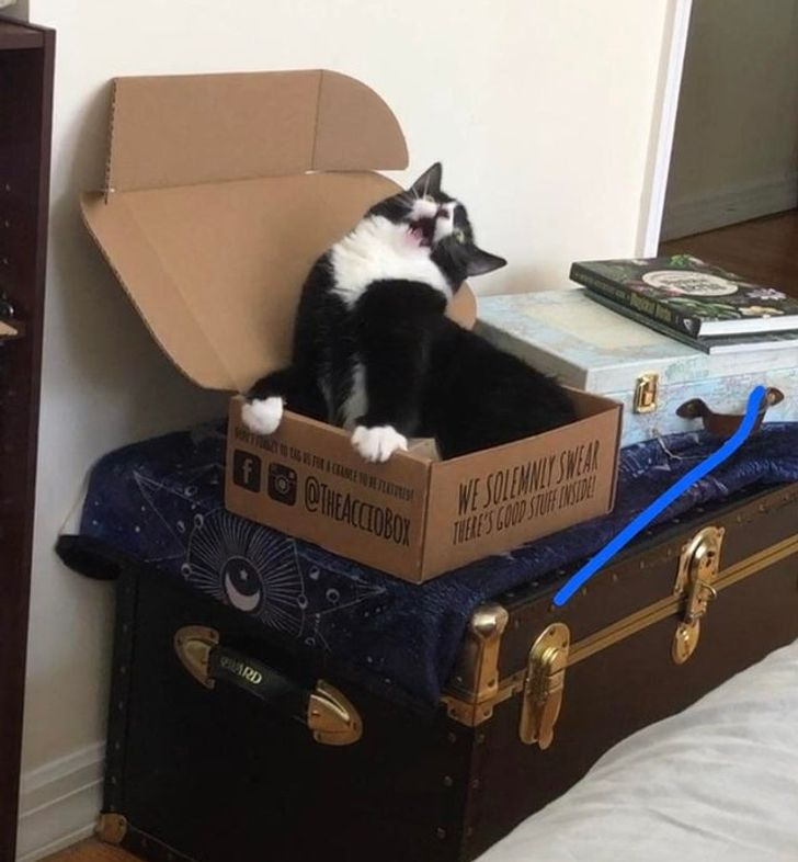 """16 Reddit Users Who Forgot the Word """"Boredom"""" When They Got Themselves a Cat"""
