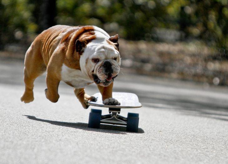 15 impressive animals that really know how to get in shape